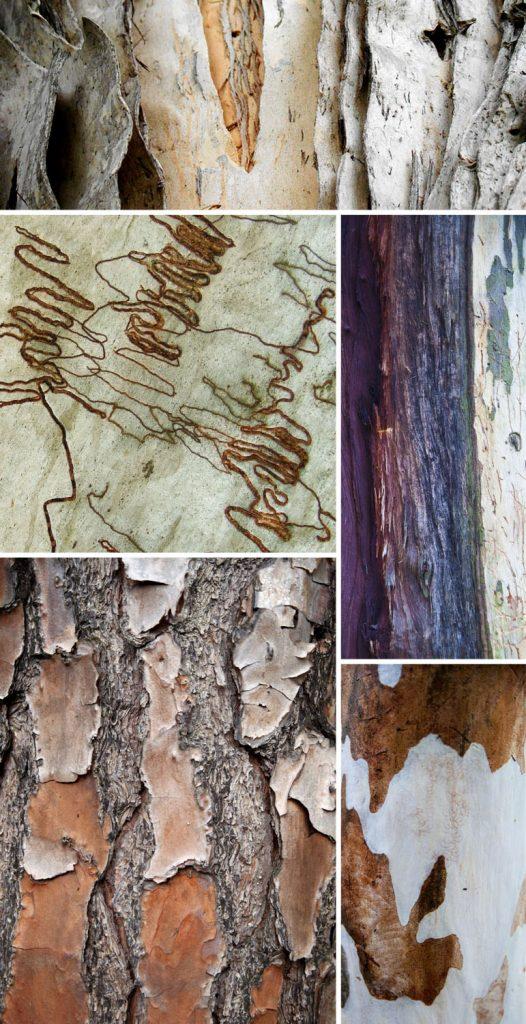 found patterns  bark