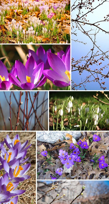 Spring_PatternObserver