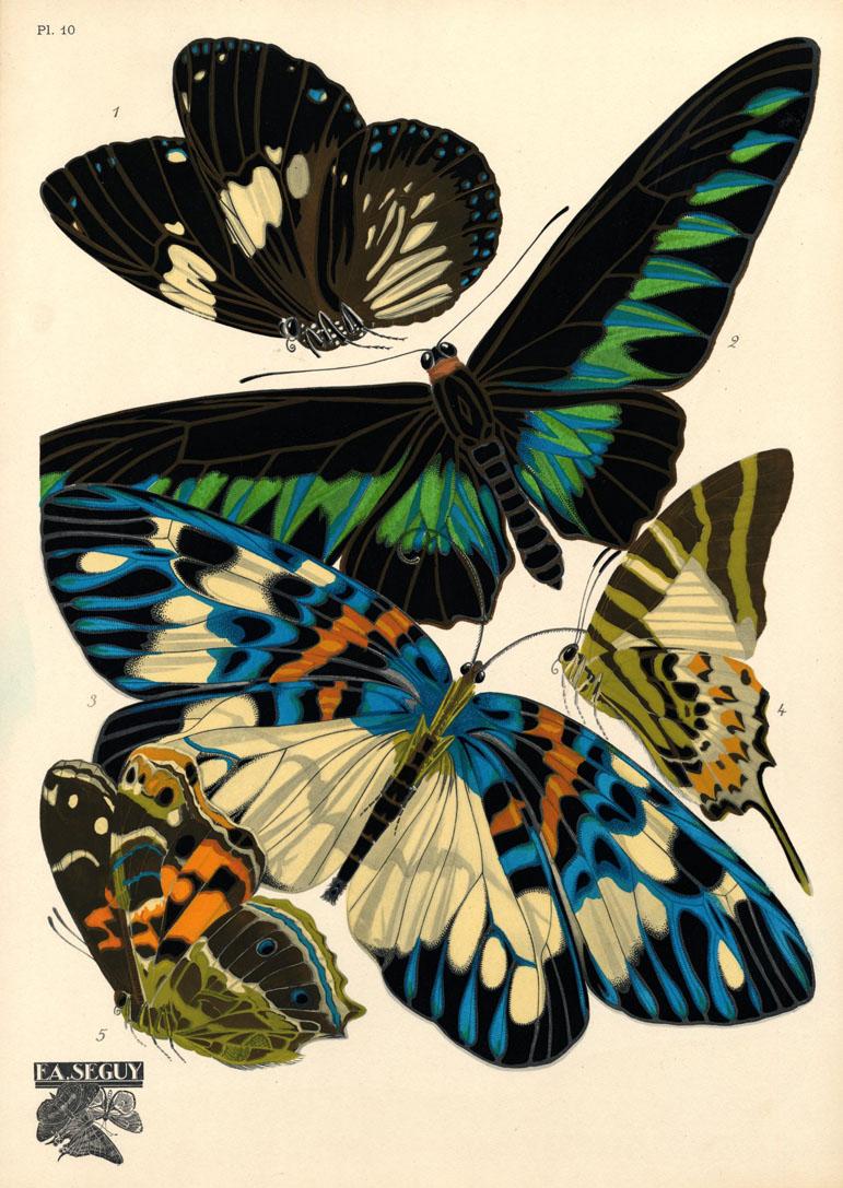 PO - seguy - papillons plate 10 - ncsu edu