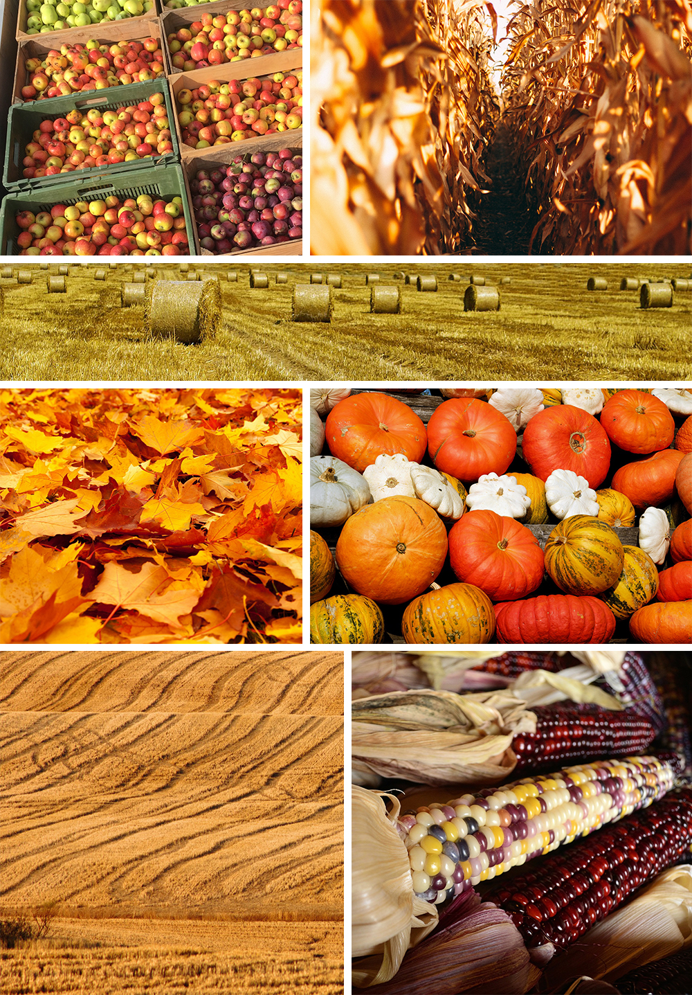 FoundPatterns_Harvest