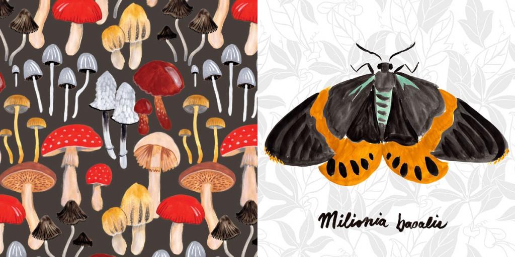 Day-flying-Moths_Katy-Dika